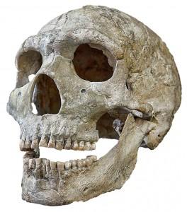 Schädel eines Neandertales