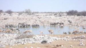 Das Wasserloch am Camp mit Tieren