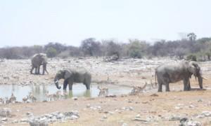 ... und jetzt mit Elefanten