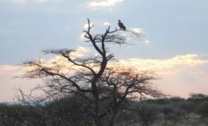Raubvogel auf einem Baum