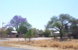 Blühende Bäume in Otjiwarongo