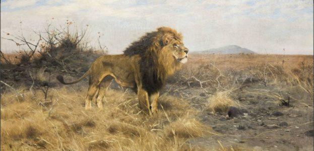 """Der """"König der Tiere"""" in stolzer Pose"""